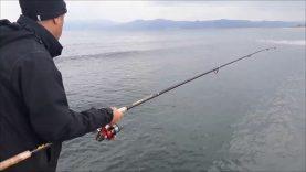 Kıyıdan lüfer avı