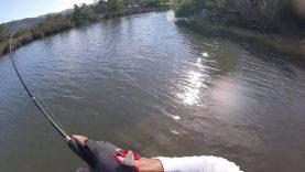 LRF su üstü levrek avı