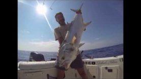 Tekneden çatal kuyruk balığı avı