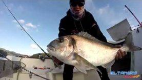 Big seabream for El Tanero Fishing ( DORADA GIGANTE )