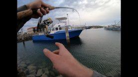 Bream Fishing with Z-man Grubz