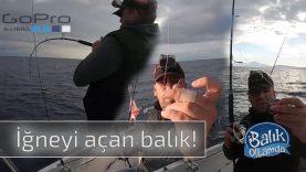 Koparan, iğneyi açan ve yakalanan balıklar tasmalama anıyla bu videoda!