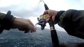 Shore jigging ile kıyıdan fangri avı