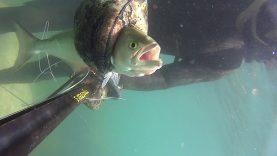 Zıpkın İle Lüfer Avı | Bluefish Hunt